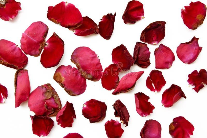 在白色的干红色玫瑰花瓣 免版税库存图片
