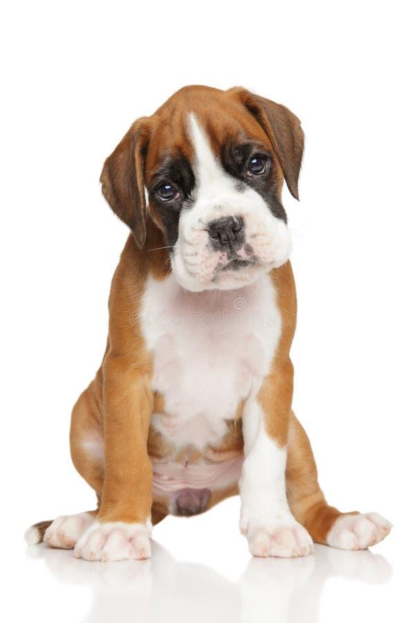 在白色的德国拳击手小狗 图库摄影