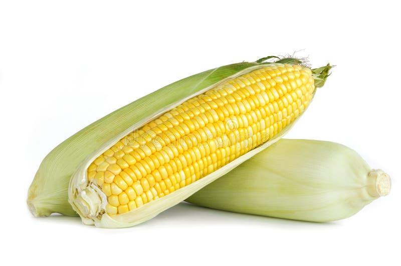 在白色的新鲜的玉米孤立 库存照片