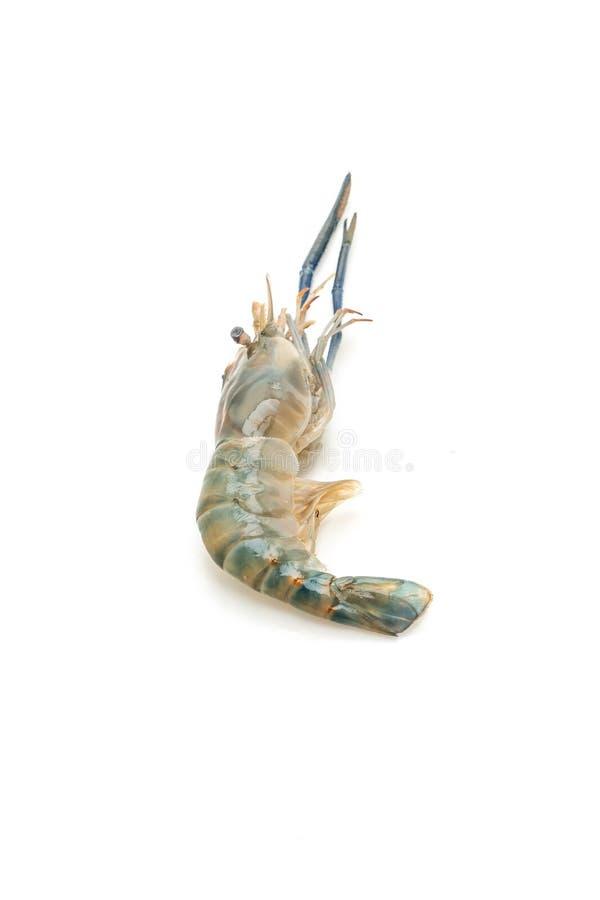 在白色的新鲜的虾 免版税图库摄影