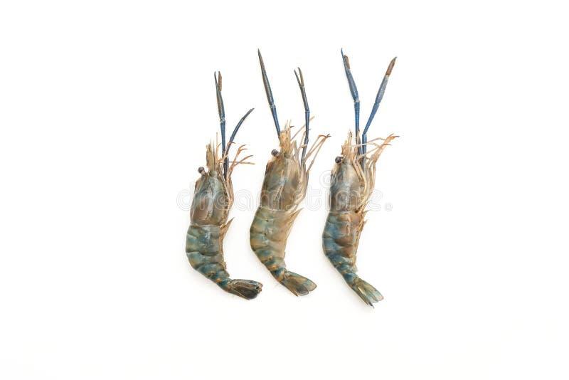 在白色的新鲜的虾 库存照片