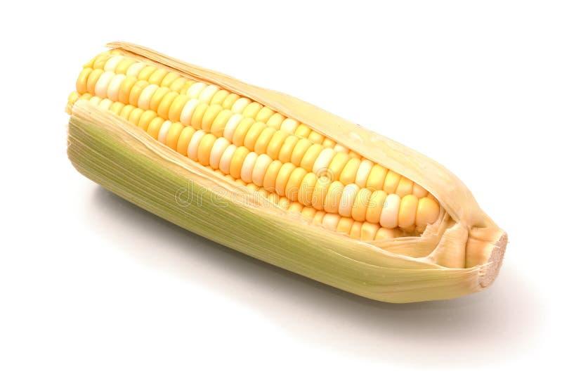 在白色的玉米 免版税库存图片