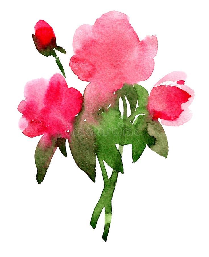 在白色的玫瑰。 库存例证