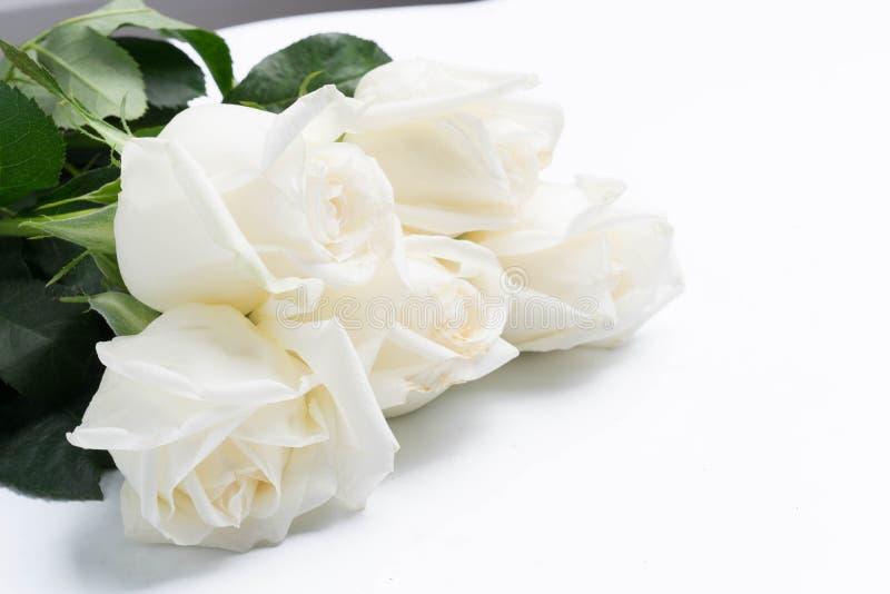在白色的白玫瑰 库存图片