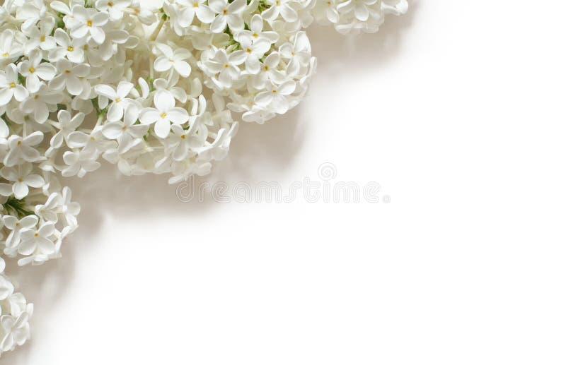 在白色的白色淡紫色花 库存图片