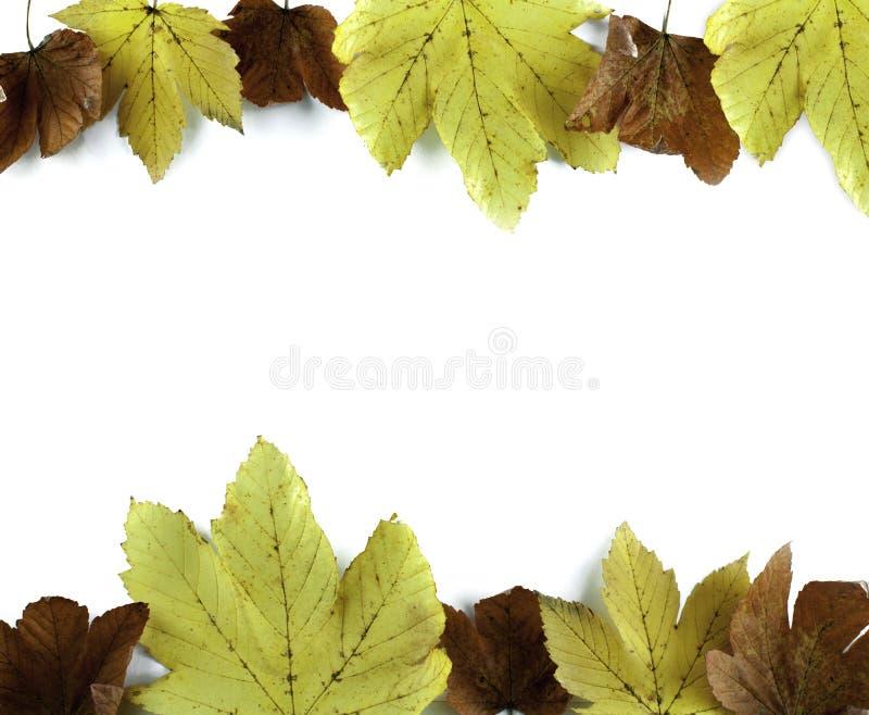 在白色的秋天叶子 库存图片