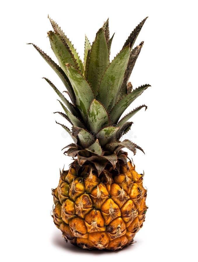 在白色的纳诺菠萝 库存图片