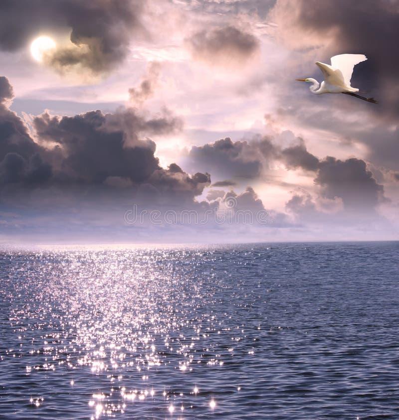 在白色的美丽的白鹭飞行海洋 库存图片