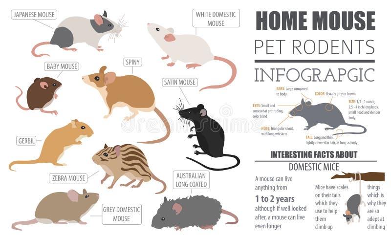 在白色的老鼠品种象集合平的样式 老鼠啮齿目动物 向量例证
