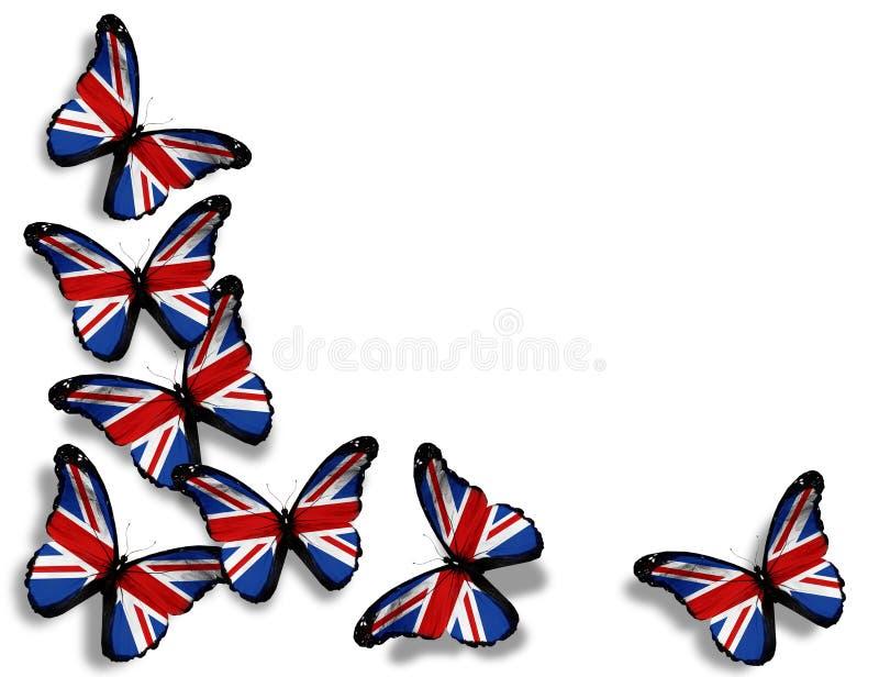 在白色的英国标志蝴蝶 库存照片