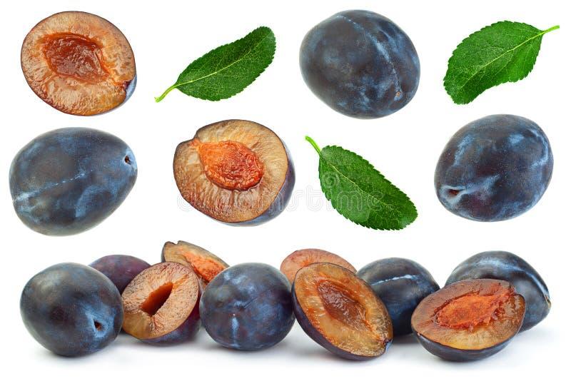 在白色的蓝色李子果子收藏 库存图片