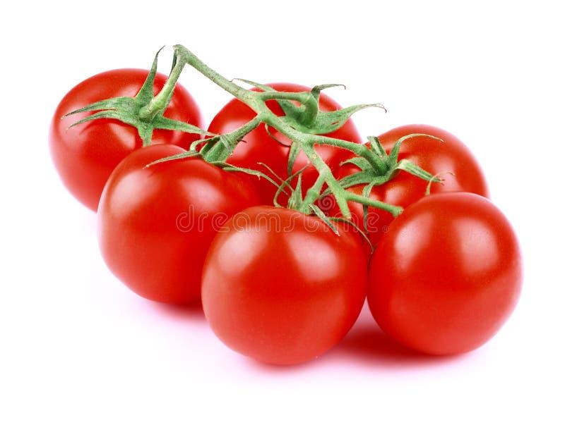 在白色的蕃茄分支。 免版税库存图片