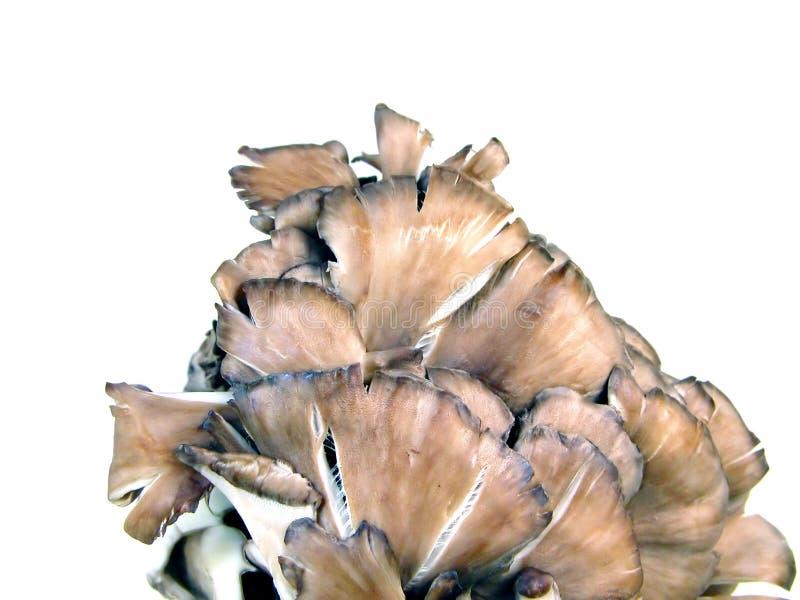 在白色的蘑菇 免版税库存照片