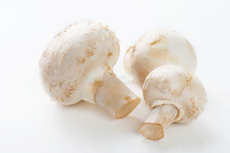 在白色的蘑菇 免版税库存图片