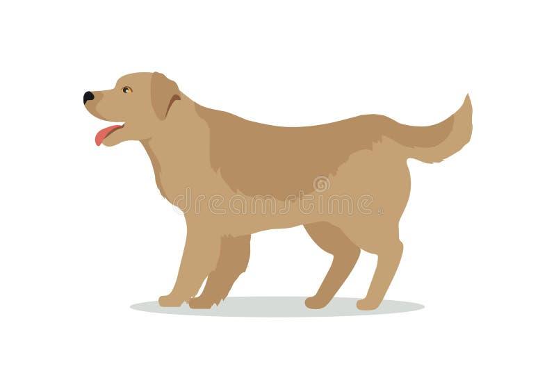 在白色的金毛猎犬狗 拉布拉多 向量例证