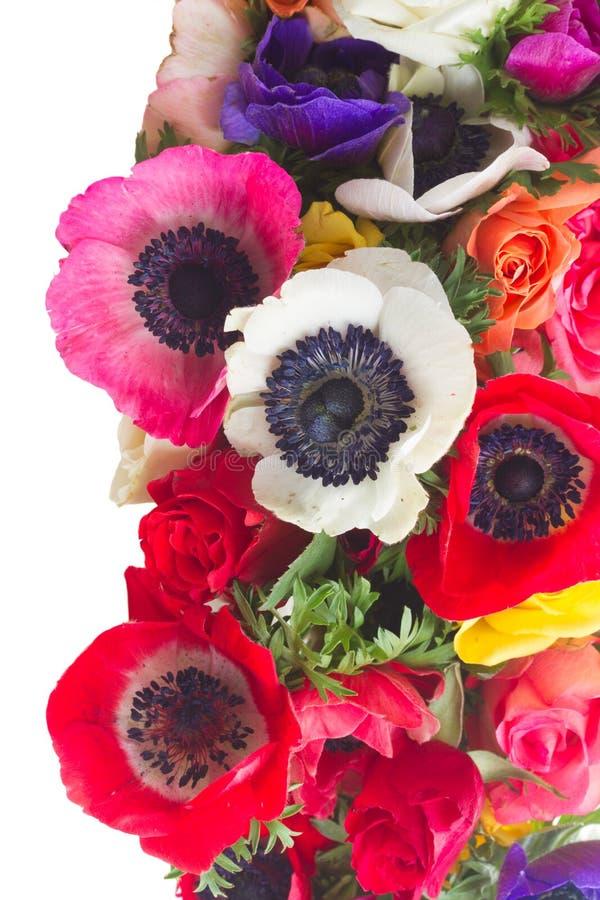 在白色的银莲花属 库存照片