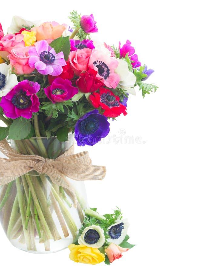 在白色的银莲花属 免版税库存图片