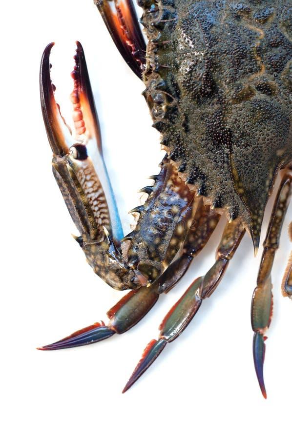 在白色的青蟹 免版税库存图片
