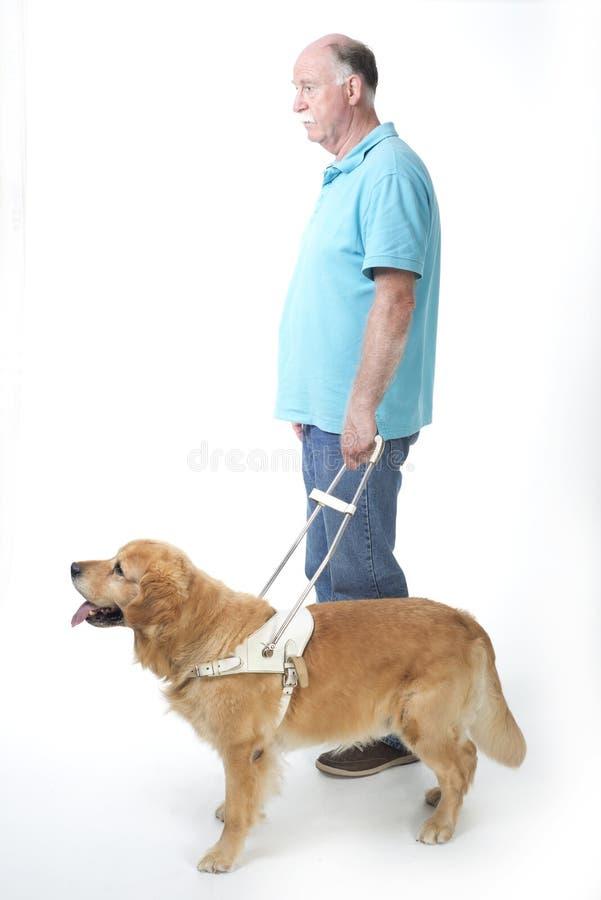 在白色的领路狗 免版税图库摄影