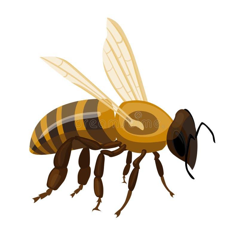 在白色的飞行的现实蜂蜜蜂特写镜头手拉的样式 皇族释放例证