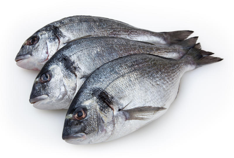 在白色的鲜鱼dorado 免版税图库摄影