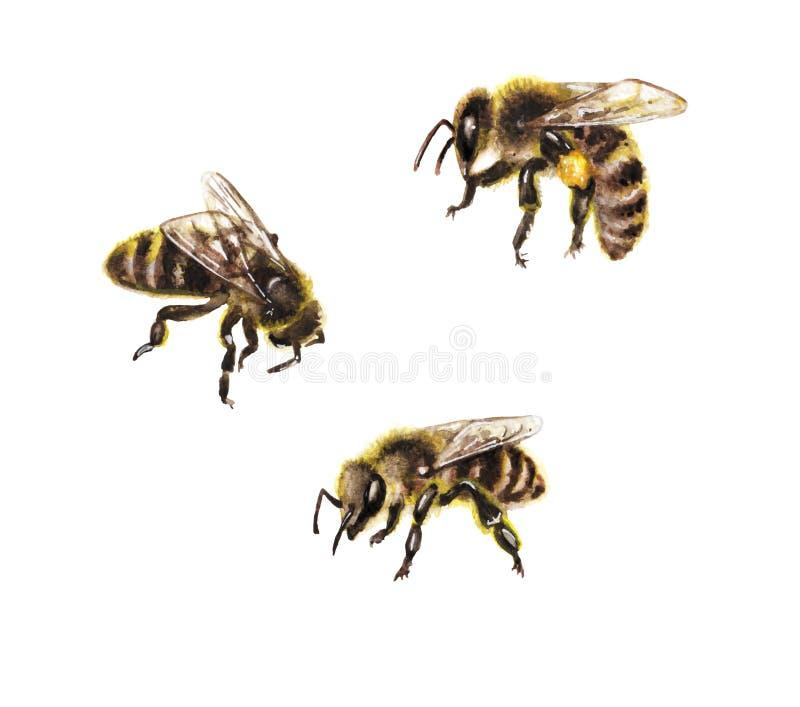 在白色的水彩蜂 免版税库存图片