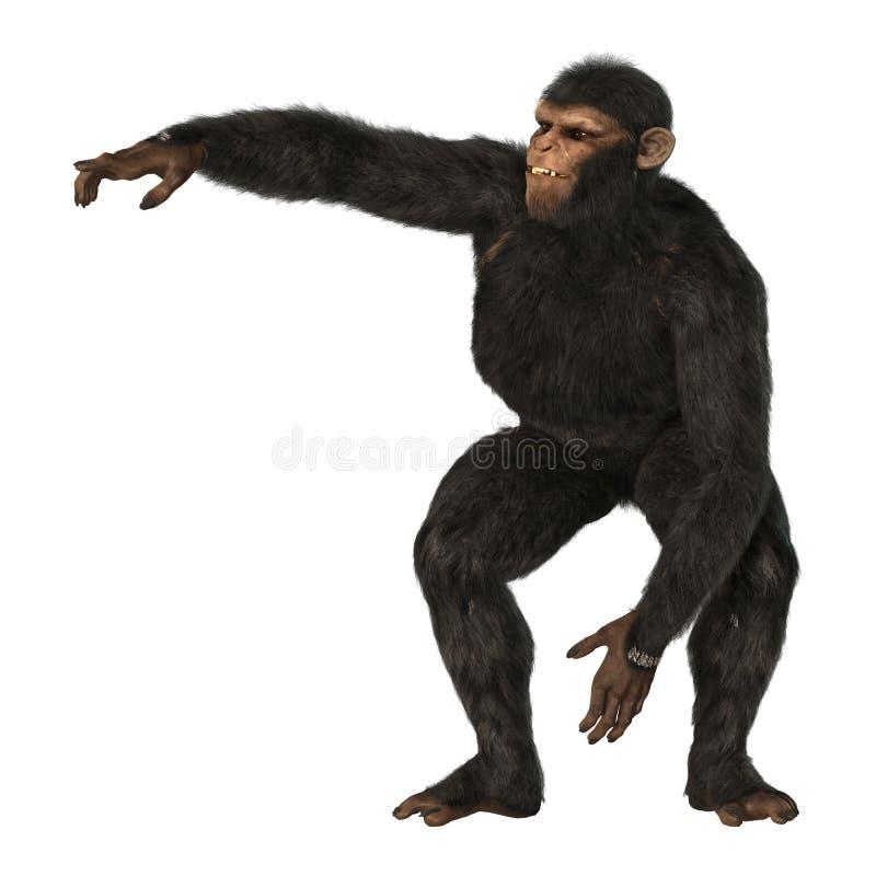 在白色的黑猩猩猴子 库存例证