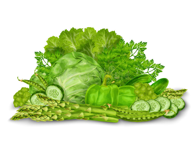 在白色的绿色菜混合 向量例证