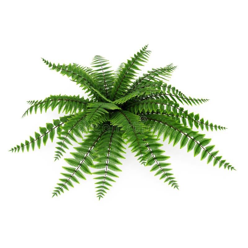 在白色的绿色蕨 3d例证 库存例证
