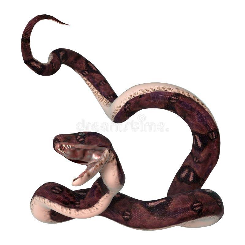 在白色的水蟒蛇 免版税库存图片