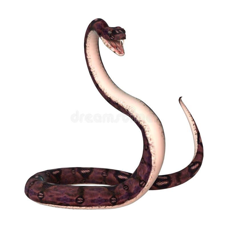 在白色的水蟒蛇 库存照片