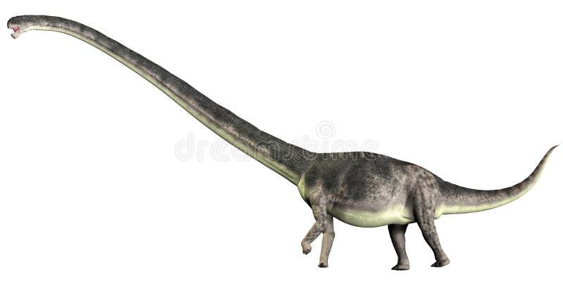 在白色的Omeisaurus