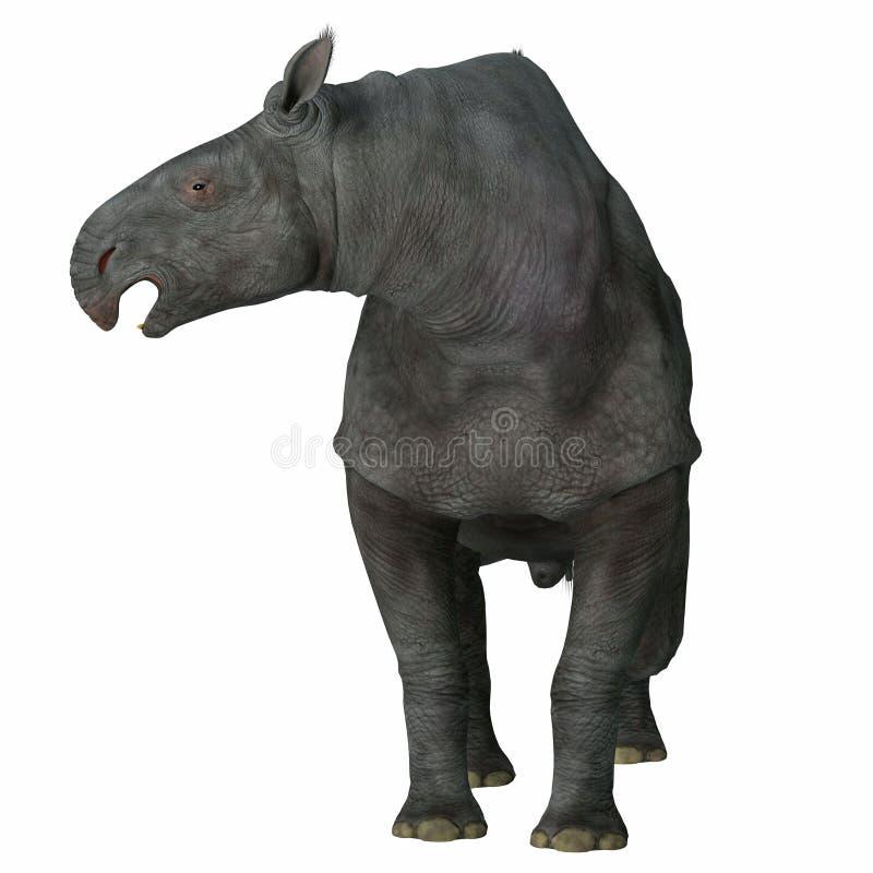 在白色的Paraceratherium哺乳动物 库存例证