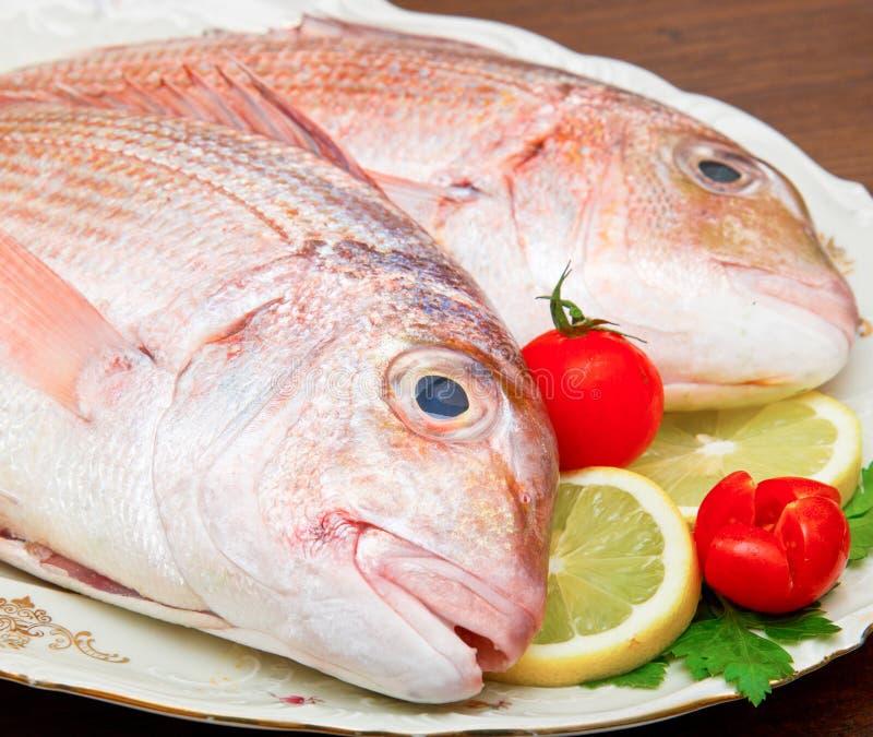 在白色盘的未加工的钉头鱼在木背景 免版税库存照片