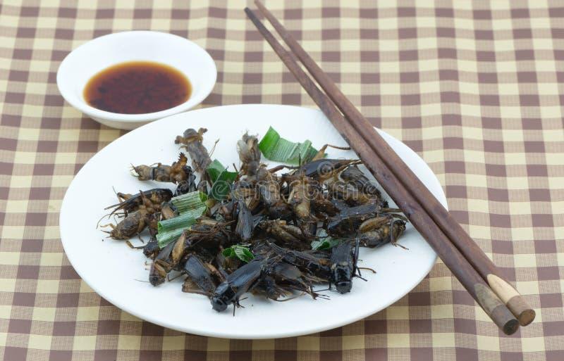 在白色盘的油煎的蟋蟀 库存图片