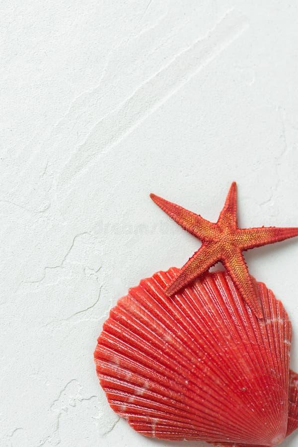 在白色石背景的红色半舱内甲板圈子海壳星鱼 社会媒介博克的最低纲领派现代被称呼的储蓄照片 免版税库存照片