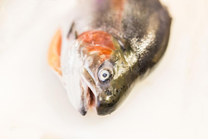 在白色砧板的新鲜的三文鱼 库存照片