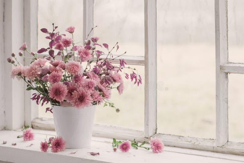 在白色窗台的桃红色菊花 库存照片