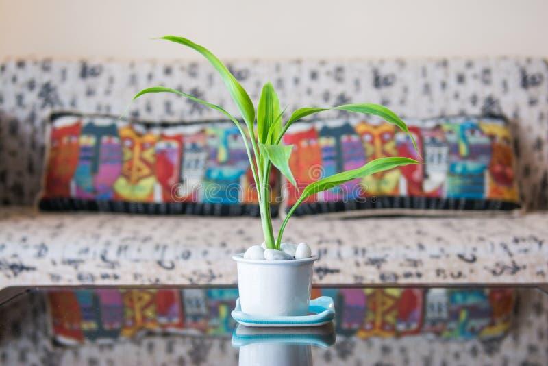 在白色罐的一点树在休息室 免版税图库摄影
