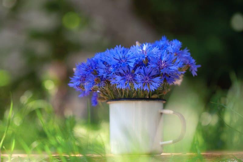 在白色罐的夏天美丽的花束蓝色玉米花在自然背景 图库摄影