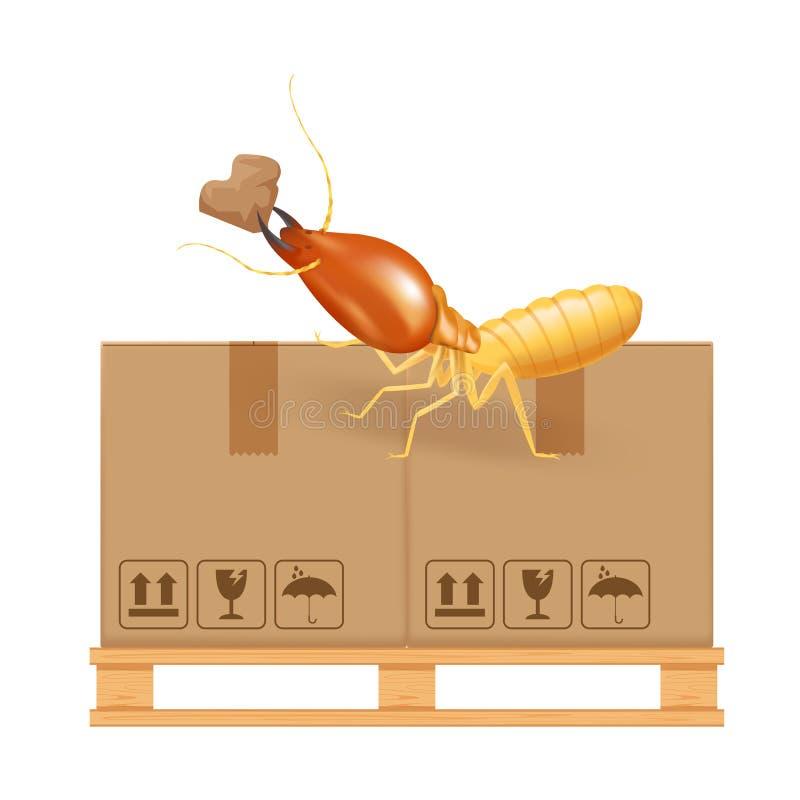 在白色背景、白蚁和木板台吃纸箱棕色隔绝的白蚁叮咬在工厂有纸板箱的 库存例证