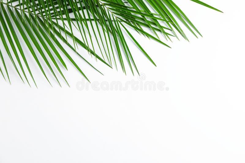 在白色背景、顶视图和空间的美丽的棕榈叶文本的 免版税库存照片
