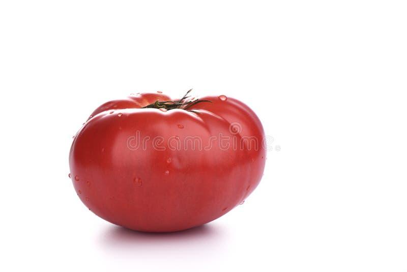 在白色背景与水下落的成熟大蕃茄隔绝的 免版税库存图片