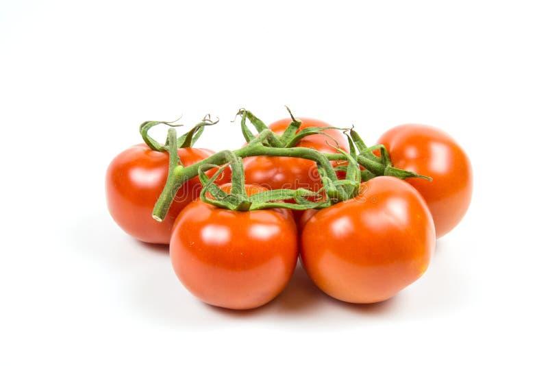 在白色背景与水下落的隔绝的新鲜的红色蕃茄分支  图库摄影