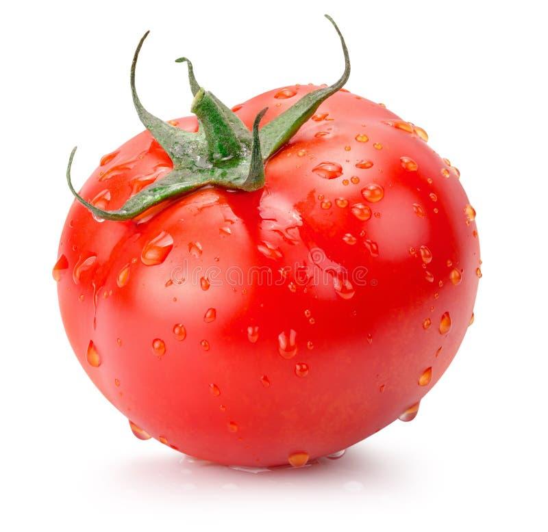 在白色背景与水下落的蕃茄隔绝的 免版税库存照片