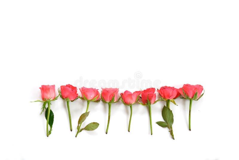 在白色背景从上面隔绝的桃红色玫瑰行,拷贝空间,大角度看法 图库摄影