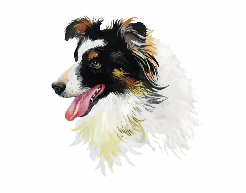 在白色背景传染媒介隔绝的博德牧羊犬动物狗水彩例证 皇族释放例证