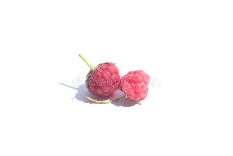 在白色背景关闭隔绝的莓  图库摄影