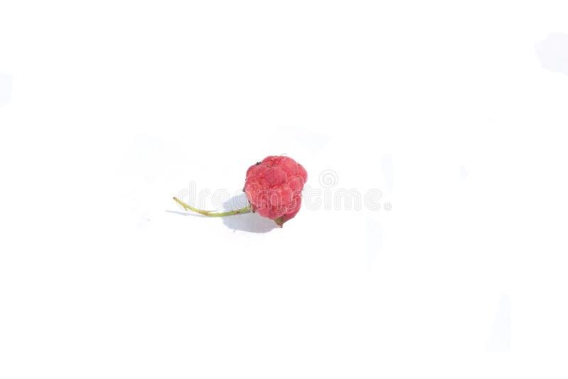 在白色背景关闭隔绝的莓  库存照片