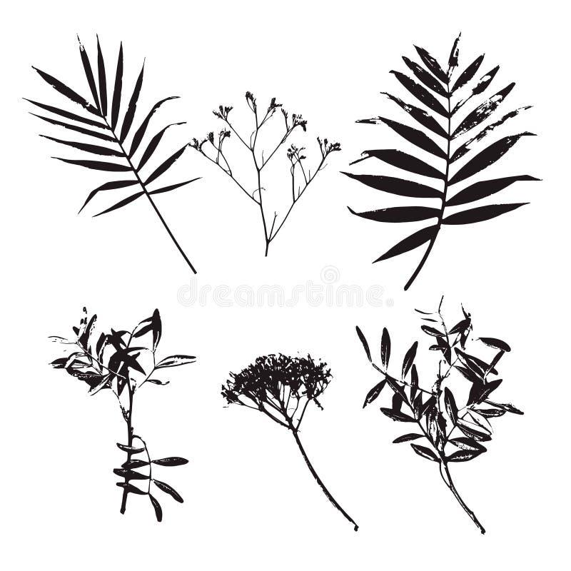 在白色背景和不同的花剪影隔绝的套棕榈叶图片